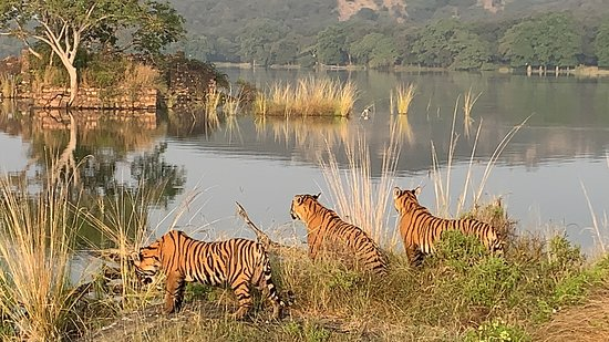 Valokuva: Indian nationals: Ranthambore wildlife safari online booking W/ Optional Trips