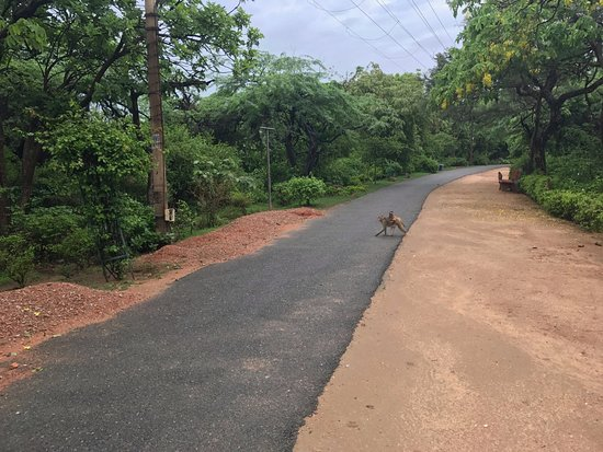 Kamla Nehru Ridge