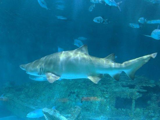 North Carolina Aquarium on Roanoke Island (Manteo) - 2019 ...