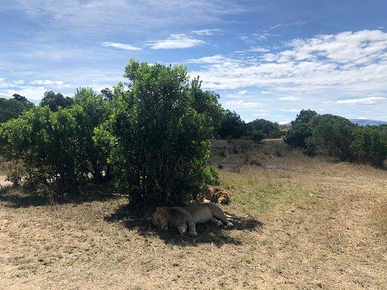 cougar Kenyában egyesült pünkösdi társkereső oldal