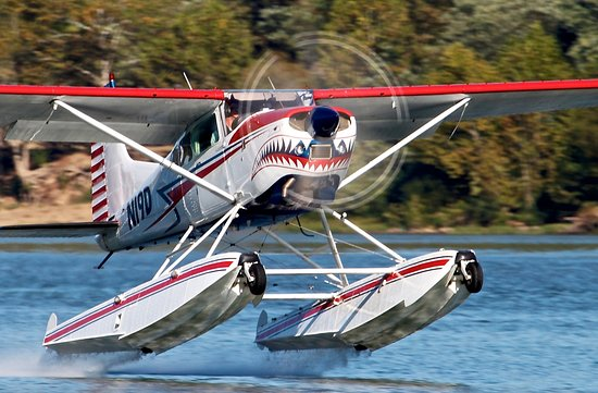 Shark Aviation
