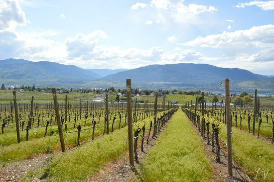 Penticton, Canada: Early spring in the top vineyard