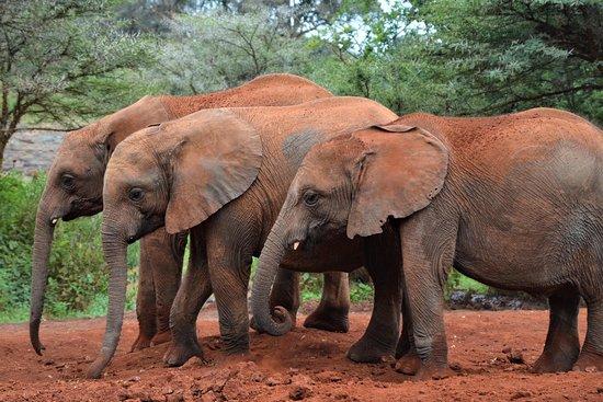 Africa Safariland Tour