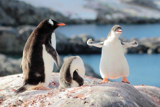 写真南極大陸枚