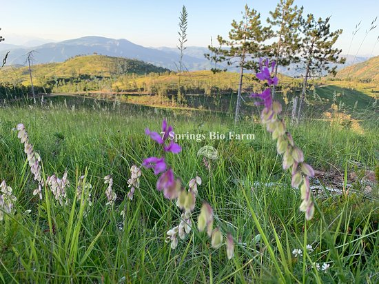 Puke, Albania: Wild Flowers
