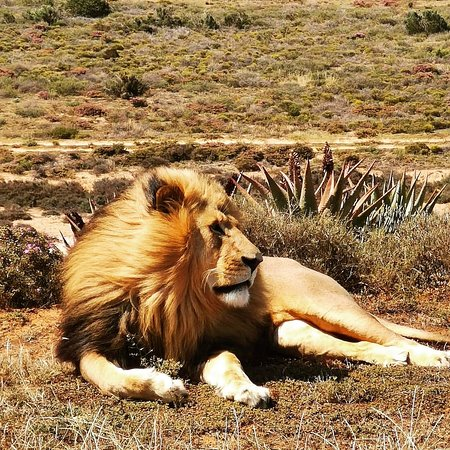 Садовый маршрут, Южная Африка: King of the Savanna Plains - a trip down the Garden Route