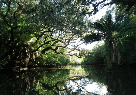 Paddle the beautiful Estero River.