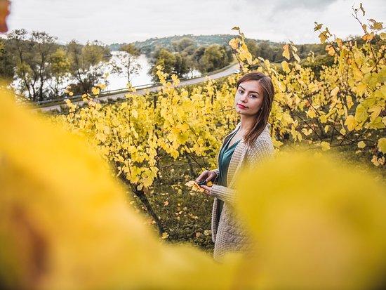 لورين, فرنسا: Automne en Lorraine ? Bien au chaud, avec un bon petit vin, que demander de mieux ;) N'hésitez pas à me retrouver sur instagram : bienvoyager #lorraine #france #voyage #LorraineVousReveler #AmazingLorraine
