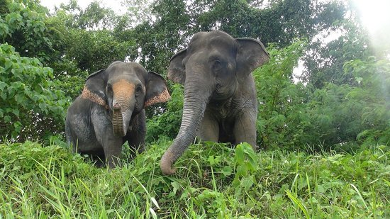 The Lake Phuket Elephant Nursery