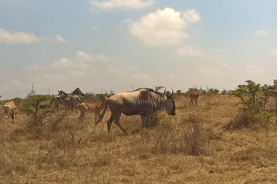 Africa Haritom Safaris