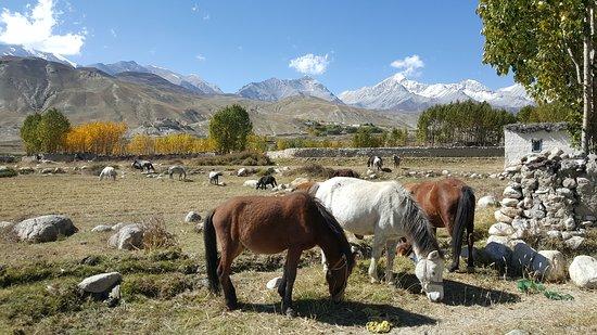 Himalayan Excursion Nepal
