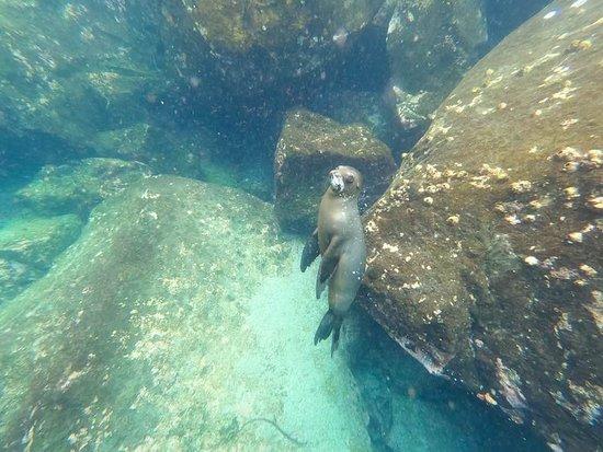 Santa Fe Island, Ecuador: La cría de lobo marino, muy cirugías, se nos acercaba para saber qué hacíamos, y nos miraba mucho.