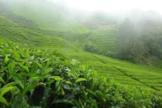 Privat heldags Cameron Highlands Nature...