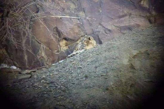 Snow Leopard Trek è uno dei trekking