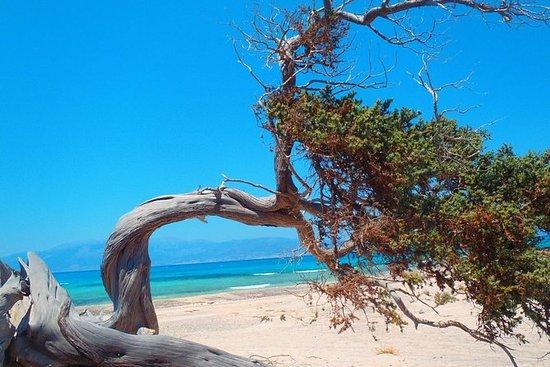Chrissi Island Tour