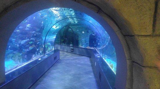 Funtastic Aquariums: Bandar-e Anzali Aquariums tunnel