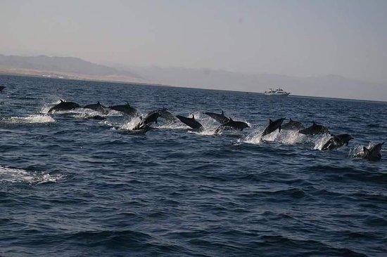 Fotografia de Tiran Island