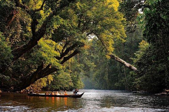 Parque Nacional Taman Negara Pahang...