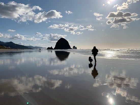 Dogtor Sveglia jogging on the beach (433415068)