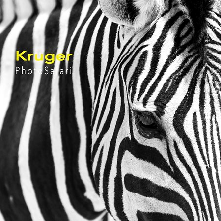 Marloth Park, แอฟริกาใต้: Kruger Photo Safari is passionate about Kruger National Park, the bush and photographing wildlife and to help other improve their photographic skills and to take there very own amazing wildlife photos and all our tours are private and personal catered to your needs.