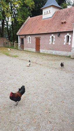 Tilloy-les-Mofflaines, Francja: le parc du manoir