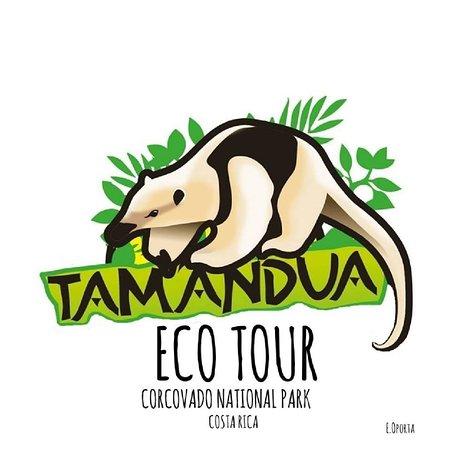 Puerto Jimenez, Costa Rica : Tamandua Ecotour