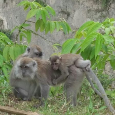 West Sumatra, Indonesië: NGARAI SIANOK, BUKITTINGGI, WEST SUMATERA