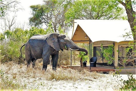 Honeyguide Khoka Moya Camp Africa and