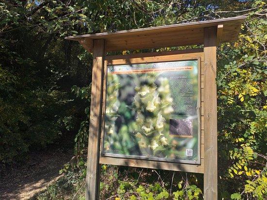 Riserva Naturale Regionale del Monte Salviano