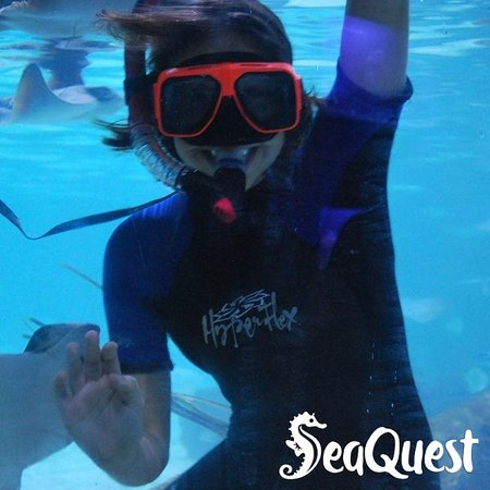 SeaQuest Lynchburg