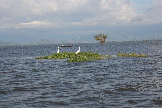 Cesar Department, Colombia: Ciénaga de Zapatosa, el espejo de agua más grande de Latinoamérica, ubicada en el departamento del Cesar.Ven a conocerla y a disfrutar del paisaje.