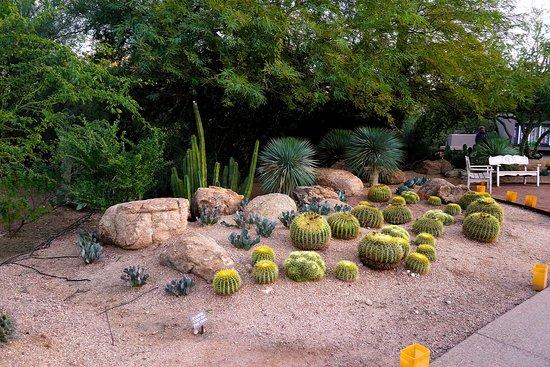 Desert Botanical Gardens 1201 N Galvin Pkwy Phoenix Las Noches De Las Luminarias Inside The Gardens Picture Of Desert Botanical Garden Phoenix Tripadvisor