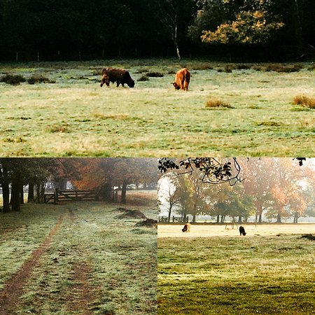 Bakel, Нидерланды: Mooie herfstwandeling tussen de buffels