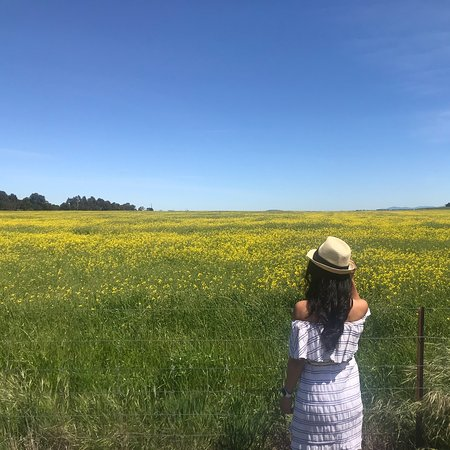 A beautiful day for a beautiful road trip to Miners Rest, searching for Canola fields. A perfect day for me 👍