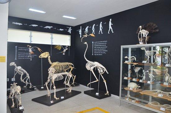 Museu de Historia Natural de Itapira