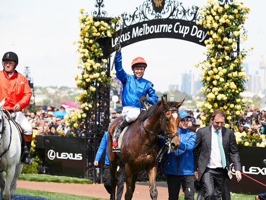 Melbourne cup betting specials on cruises betting mathematical models and methods