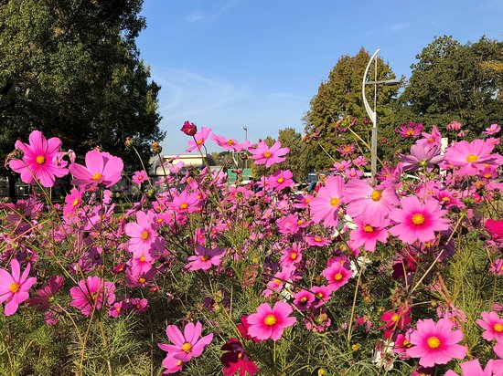 Saga Pref. Shinrin Park