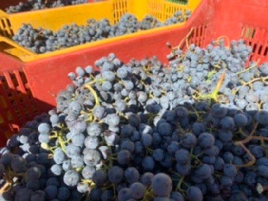 Chianti Classico wine tour - Fridays from SIENA Photo