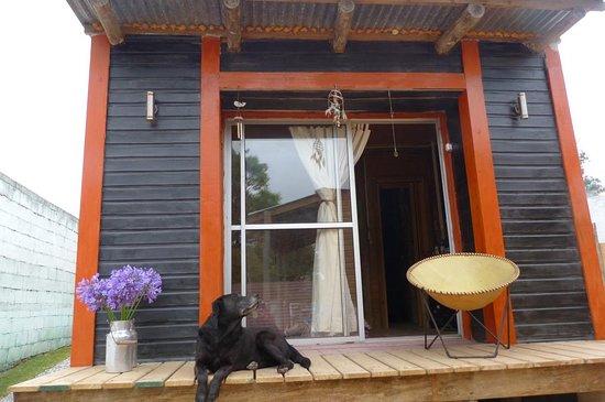 Balneario Buenos Aires, Uruguay: Harry, nuestro amigo canino, te cuenta que tenemos habitaciones extras en consulta.