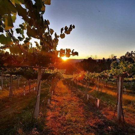 Una visita a las bodegas de Señorío de Rubios en As Neves es una buena opción para captar alguna de las mejores panorámicas con los viñedos a la hora del atardecer.