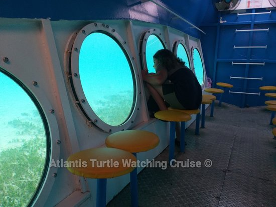 Atlantis Turtle Watching Cruise