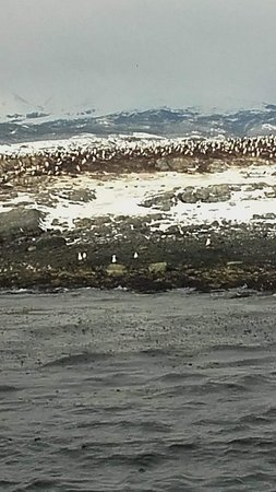 Acercamiento en barco a la isla de los pajaros
