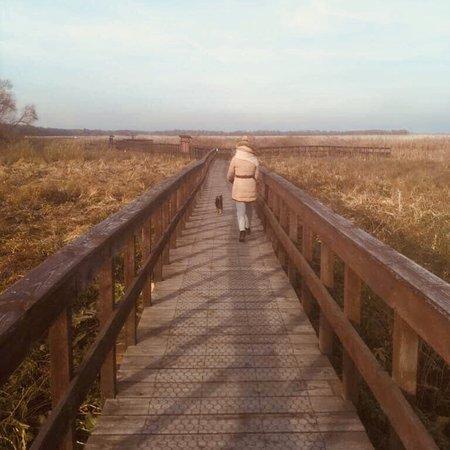 Podlaskie Province, Polonia: Super miejsce rownież na spacer z czworonogiem