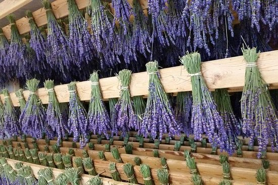 Lavender Farm, Dine & Wine in Prince Edward County (Bus tour from Toronto)