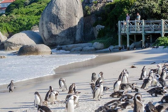 Cape Point og Boulders Beach Penguin...