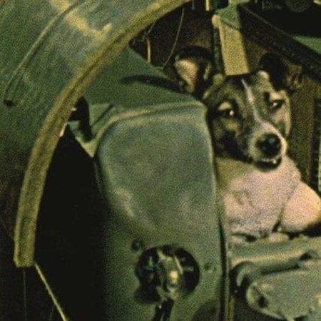 Venäjä: 3 novembre 1957 Laika non ti dimentichiamo e non dimentichiamo che sei stata una delle vittime della tracotante superbia umana .