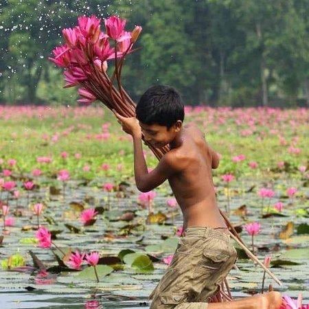 Barisal City, Bangladesh: Shapla bill