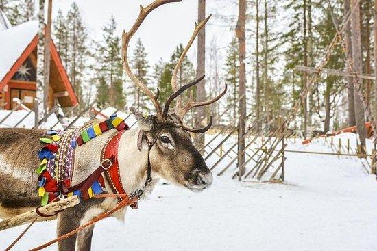 Lapland rendiersafari vanuit Levi