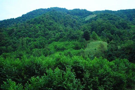 Guria Region照片