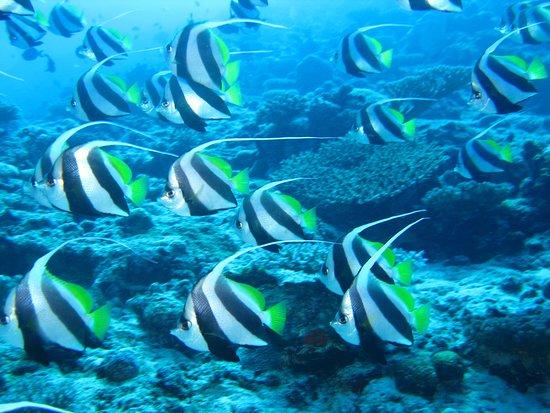 M'Tsangamouji, Mayotte: De nombreux poissons se déplacent en banc compact et entourent les plongeurs